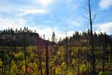 Okanagan Mountain Park