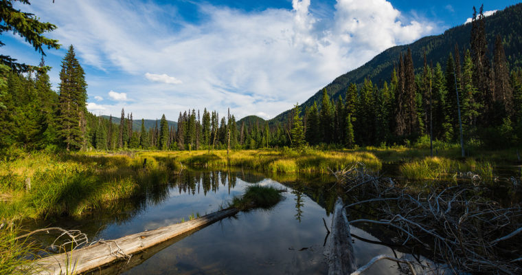 Beaver Pond Trail in Manning Park