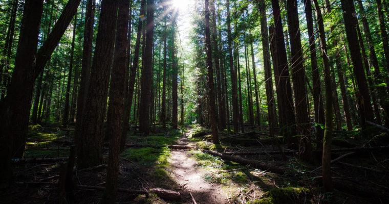 August 30, 2019 – Skagit River Trail